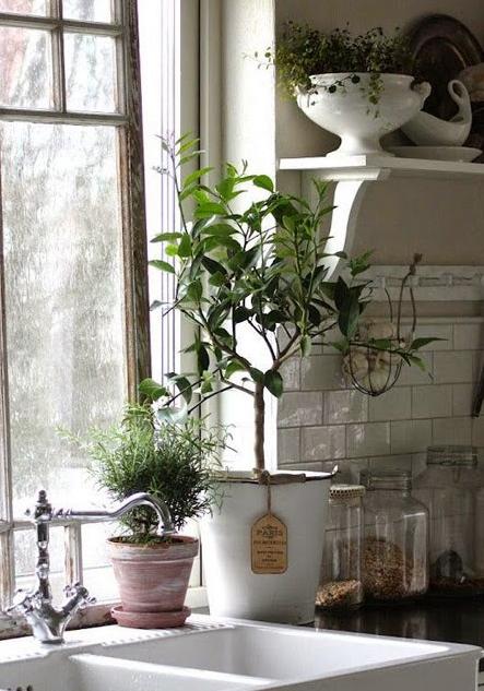 Plante pour décorer la cuisine