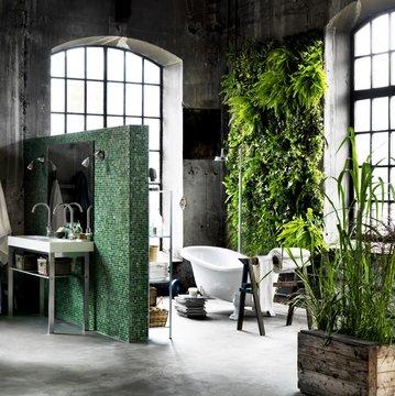 Plante pour salle de bain