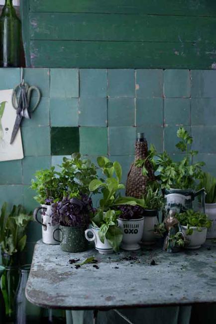 Plantes déco cuisine