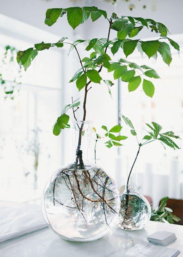Plantes pour décorer son intérieur