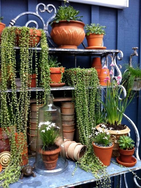 Plantes pour décorer sa terrasse